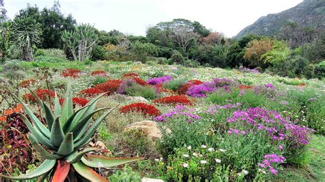 Kirstenbosch Botanical Garden Top 10 Things To Do In Cape Town For And Adults