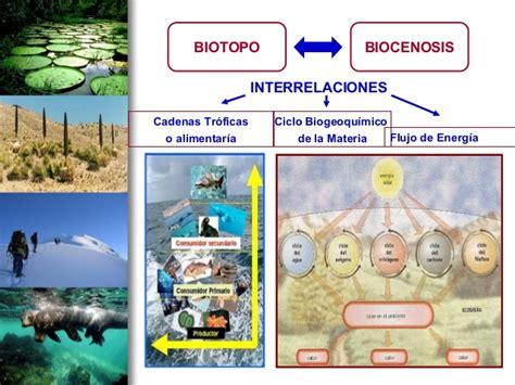 cadenas troficas y ciclos biogeoquimicos uso de las tics ecosistemas cadena trofica ciclo