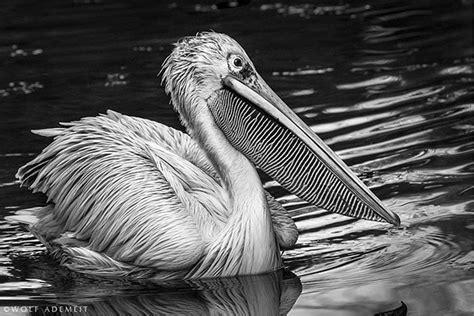 Imagenes En Blanco De Animales | maravillosas fotos en blanco y negro de animales taringa