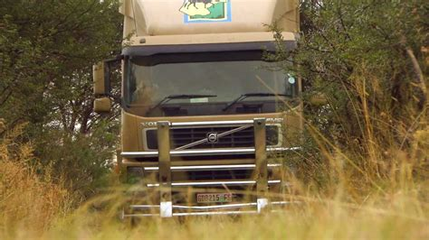 volvo trucks sa volvo trucks capturing buffaloes in the south
