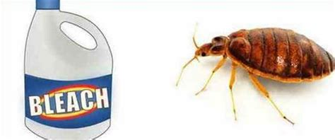 does bleach kill bed bugs 1000 ideas about killing bed bugs on pinterest bed bugs