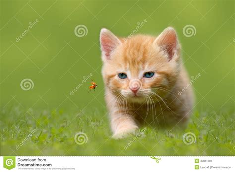 Young Cat With Ladybug On A Green Field Stock Photo