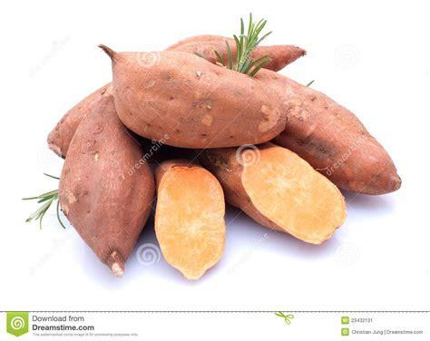 Sweety Gold Xl 26 sweet potato stock image image of harvest fresh