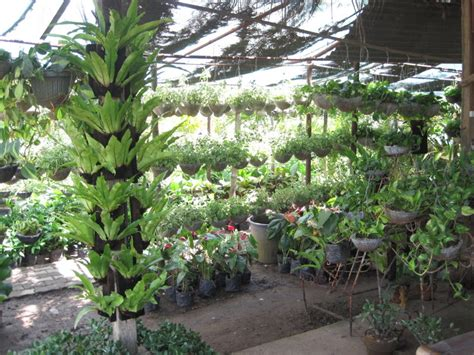tabang guiguinto  planters haven filipina explorer