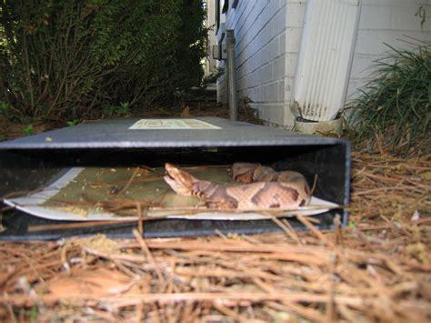 snake trap cahaba snake trap