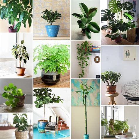 Feng Shui Jade Plant Front Door by Feng Shui Friendly Houseplants The Sill The Plant