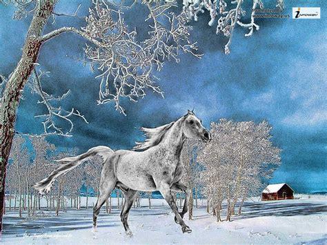 animals in the winter animal winter wallpaper wallpapersafari
