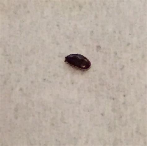 insektenstiche bett hilfe bettwanzen oder andere tierchen in meinem bett