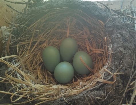 baby robins hatch and fly lake tahoe vacation rental house
