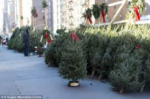 buy christmas trees to sell donald zucker sues tree vendor for selling before dec 1 daily mail