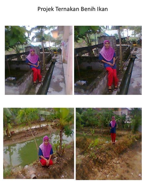 Benih Lobster Air Tawar Kedah projek ternakan benih ikan air tawar