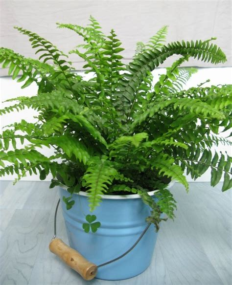10 houseplants that clean the air urban planters 10 common house plants that help clean and filter indoor air