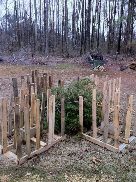 crappie beds stake beds