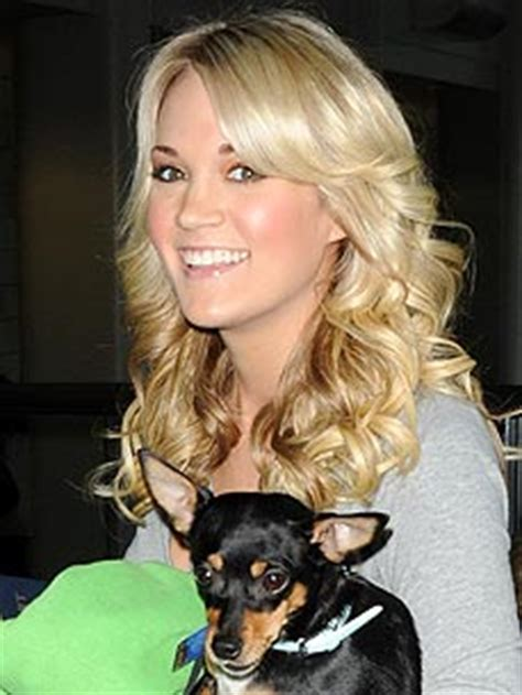 carrie underwood dogs rat terrier owned by carrie underwood pet of the week pet paw