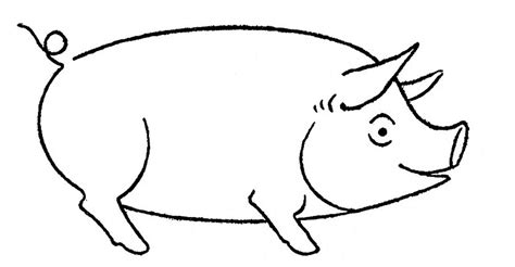 how to a pig how to draw animals pigs goats the graphics