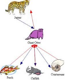 Jaguar Food Chain Qpanimals Otter