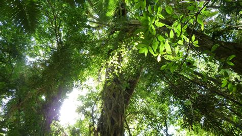 What Does Canopy In The Rainforest Daintree Rainforest Palm Cove Tropic Apartments