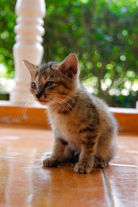 picture cat cute portrait animal outdoor kitten