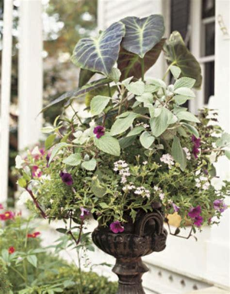 outdoor container gardening planting  beautiful pot