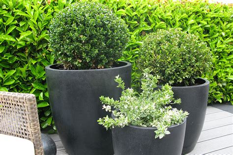 Black Ceramic Planters Black Ceramic Planters Bau Outdoors