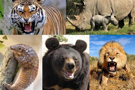 imagenes de animales endemicos los 5 animales m 225 s amenazados por la medicina tradicional
