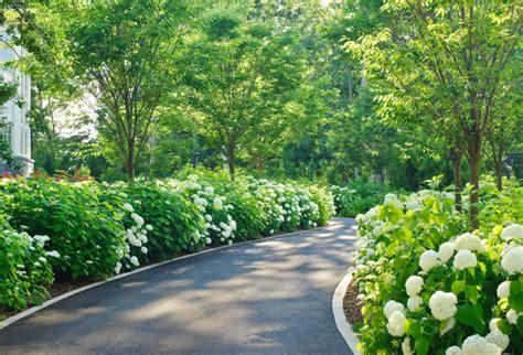 shade hydrangea 20 hydrangea garden designs ideas design trends