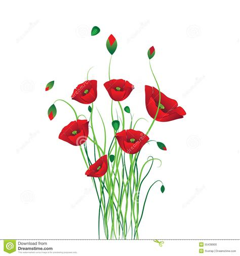 poppy background stock vector image of flower black