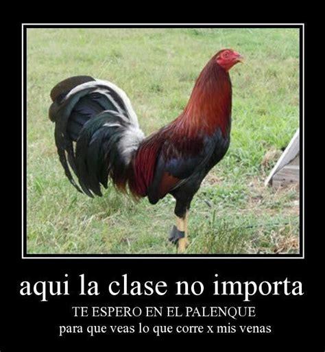 imagenes gratis de gallos con frases gallos orgullo mexicano pinterest