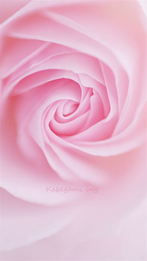 rose themes cell phone 720x1280 hd wallpapers for mobile wallpapersafari