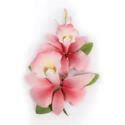 orchideen samen kaufen bakeria zucker orchideen bouquet pink 152mm