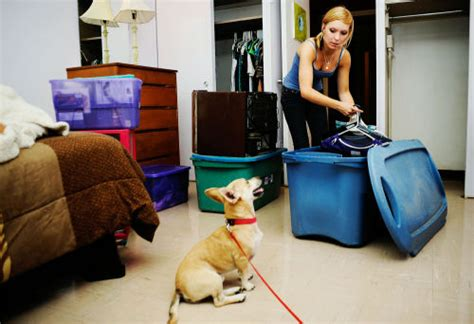 colleges that allow dogs college opens pet friendly columbia daily tribune columbia missouri education