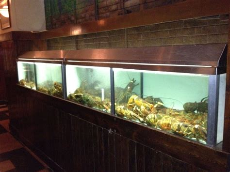 aquarium design group llc gofish aquariums llc chicago s source for custom built