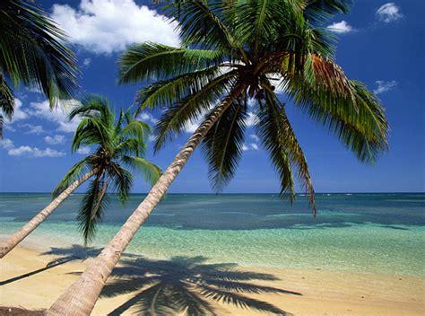 coconuts galore sri lanka  localist