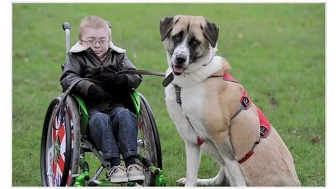 handicap dogs disabled child bonds with three legged