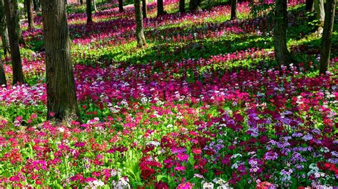 Flowers In Garden | flower gardens wallpapers wallpaper cave