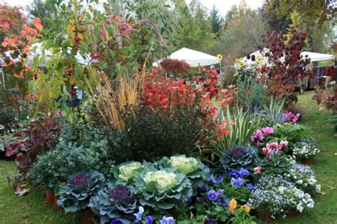 piante da giardino con fiori le piante da giardino sempreverdi