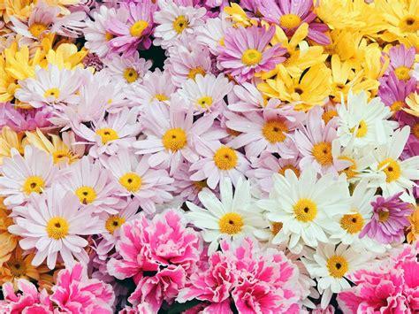 imagenes de flores de 400 x 150 funny wallpapers beauty nature flower beautiful nature