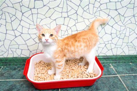 Cat Stool Softener Petco by Cat Stool Softener Lbfilms Co