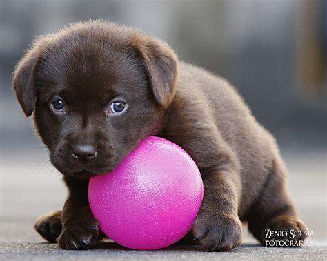 Bilder Zu Herbst 5640 by Die Besten 25 Babyhunde Ideen Auf Niedliche