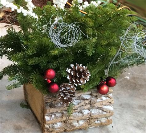 christmas planters made from christmas tree clippings
