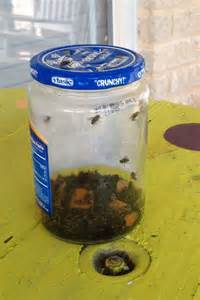 25 best ideas about best fly trap on best