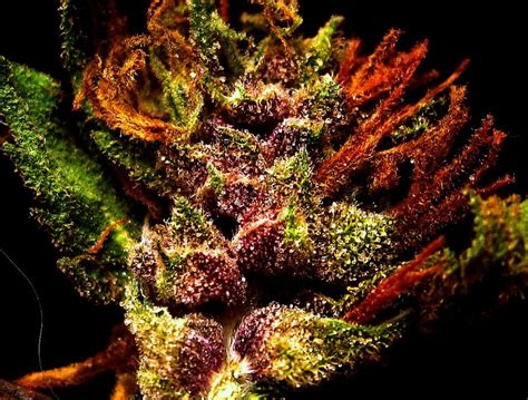 what gives plants their green color 9 best images about stoners only on medicine