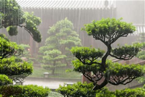 garten bonsai winterfest machen garten bonsai winterhart home image ideen