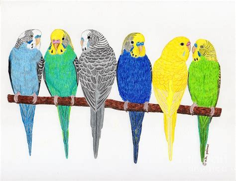 Australian Duvet Covers Six Parakeets Drawing By Rita Palmer
