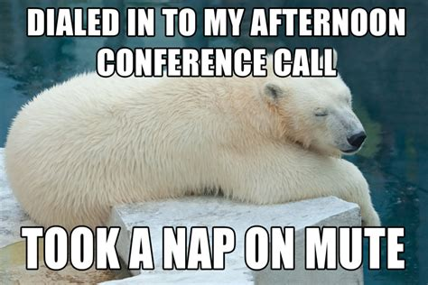 Polar Bear Meme - sorry polar bear meme memes