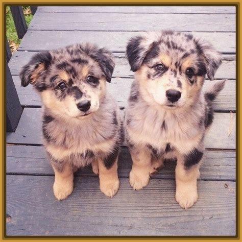 imagenes de animales para descargar imagenes de perros pastor aleman para descargar archivos