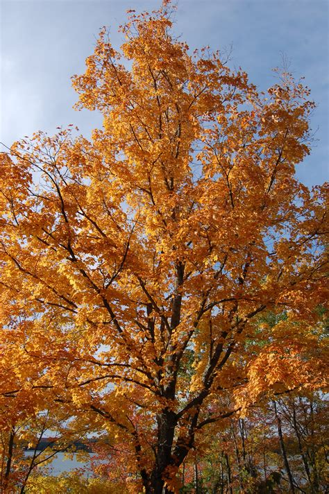 photo gallery friday 2016 michigan fall color lower peninsula travel the mitten