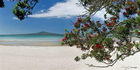 pohutukawa dreams colour rangitoto beach landscape
