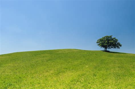 free stock photo of eco green hill