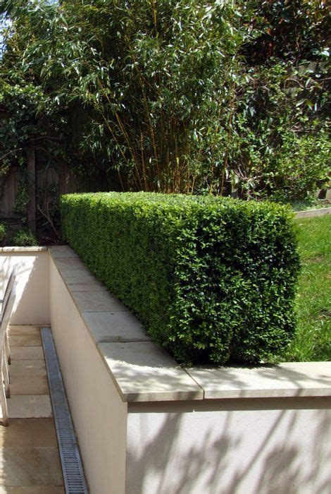 alley garden by fudge landscapes boxwoods retaining wall hedge yard retaining walls